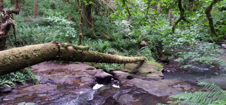 Along Deep creek Cazadero Trail