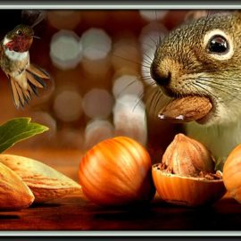 Squirrel gathering nuts