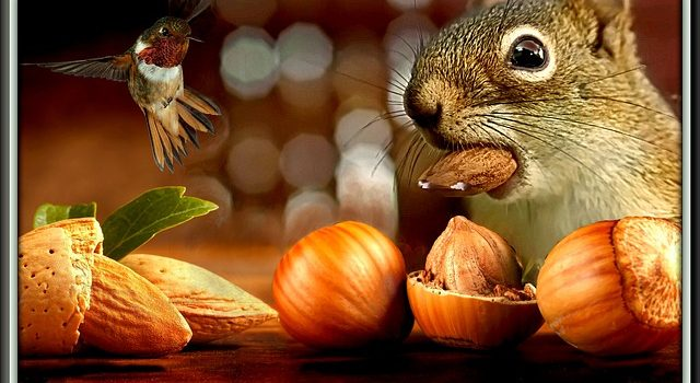 Fall.  Time to gather your nuts for winter.